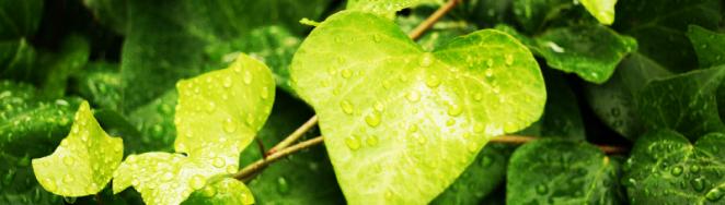 梅雨時期を快適に過ごす簡単おすすめアロマ