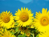 夏バテ予防に役立つアロマレシピをご紹介