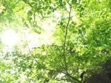 季節の変わり目に備えるアロマテラピー